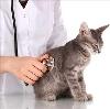 Ветеринарные клиники в Уяре